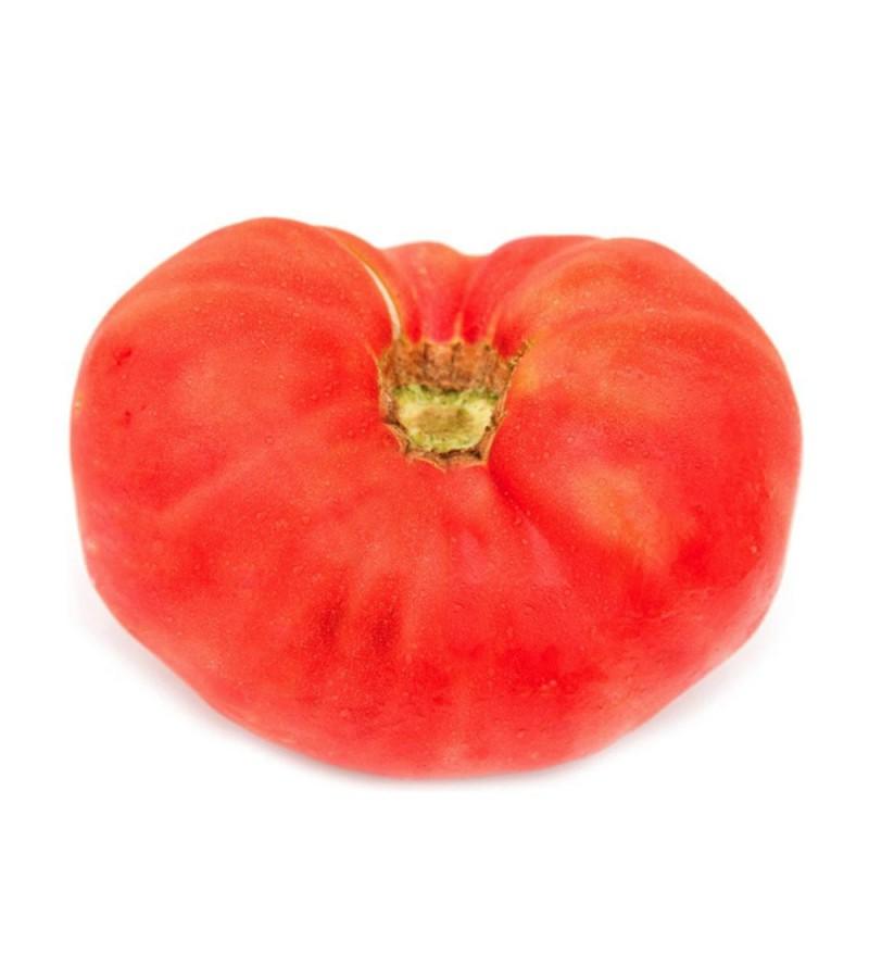 Tomate Castellano Campeador