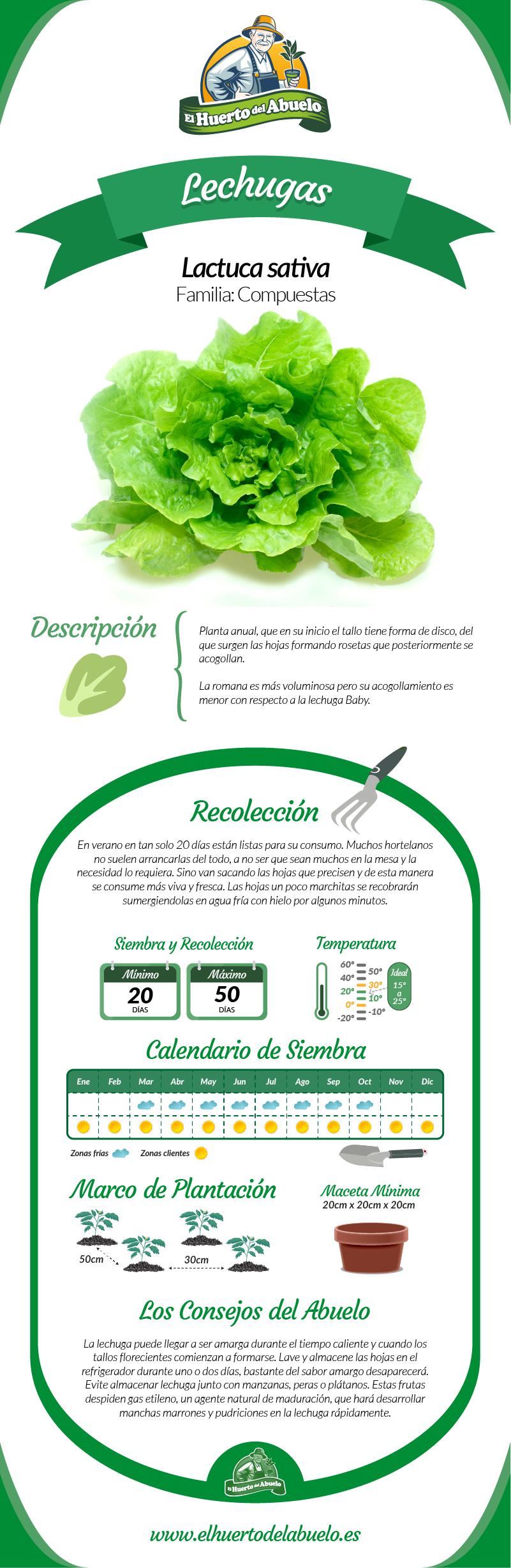 Infografia lechuga