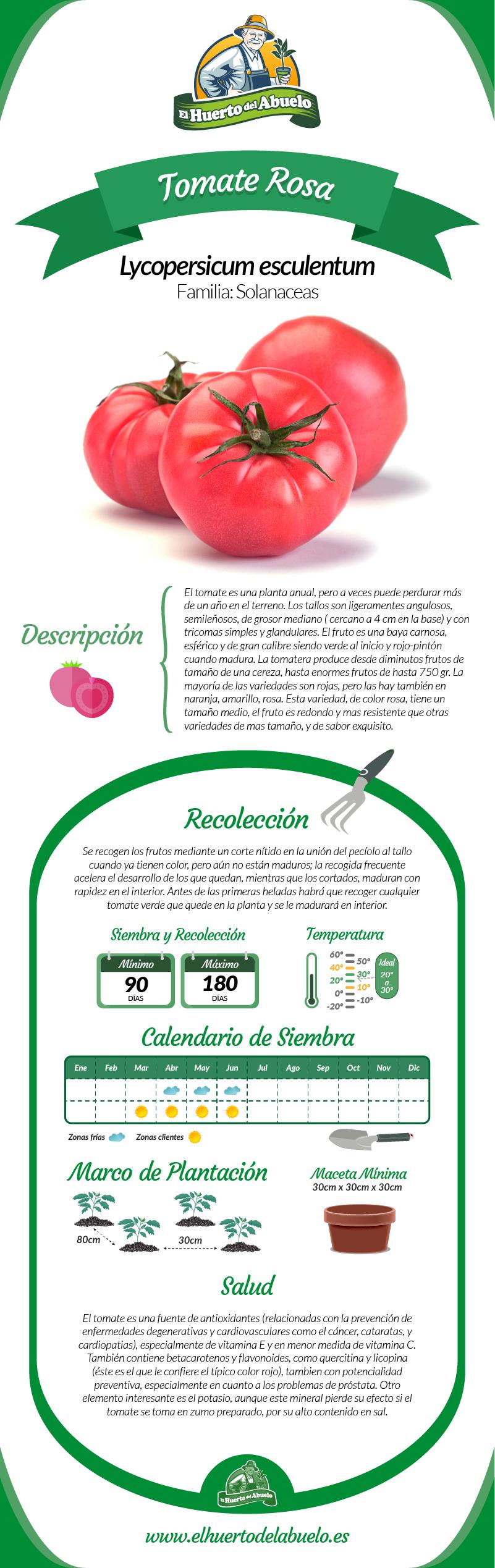 infografia_tomate_rosa-01