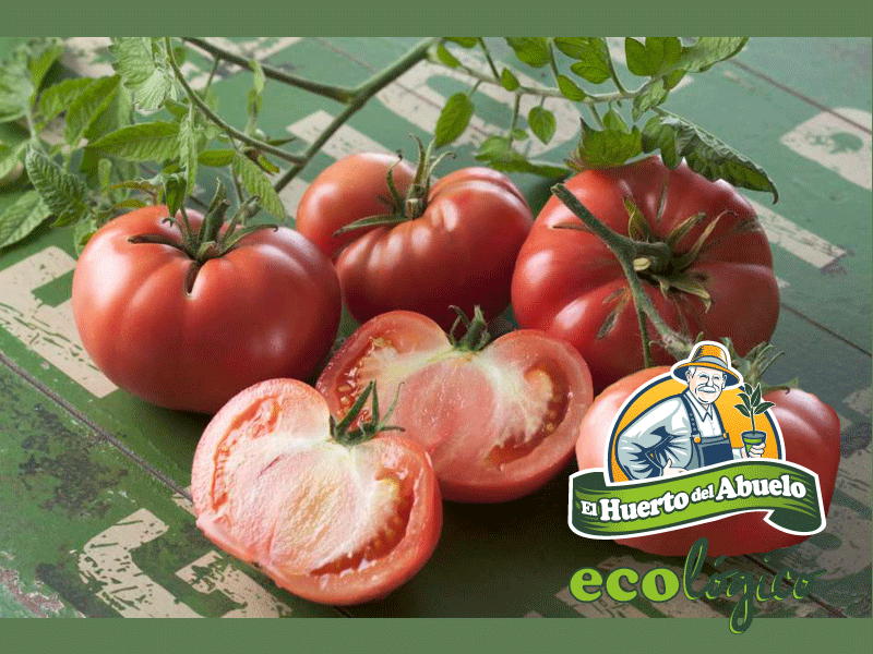 tomatesrosabarbastro