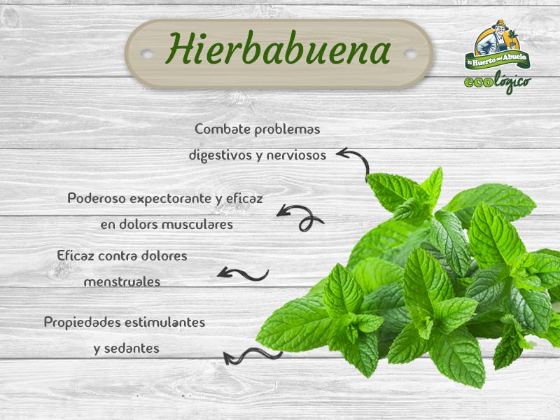 Beneficios de la hierbabuena