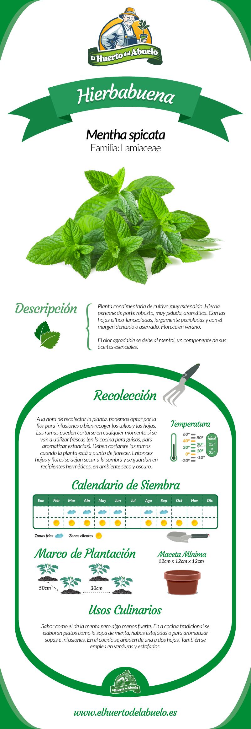 Infografía Hierbabuena