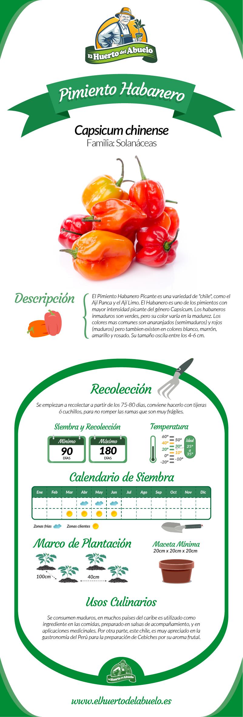 Infografía Pimiento Picante Habanero