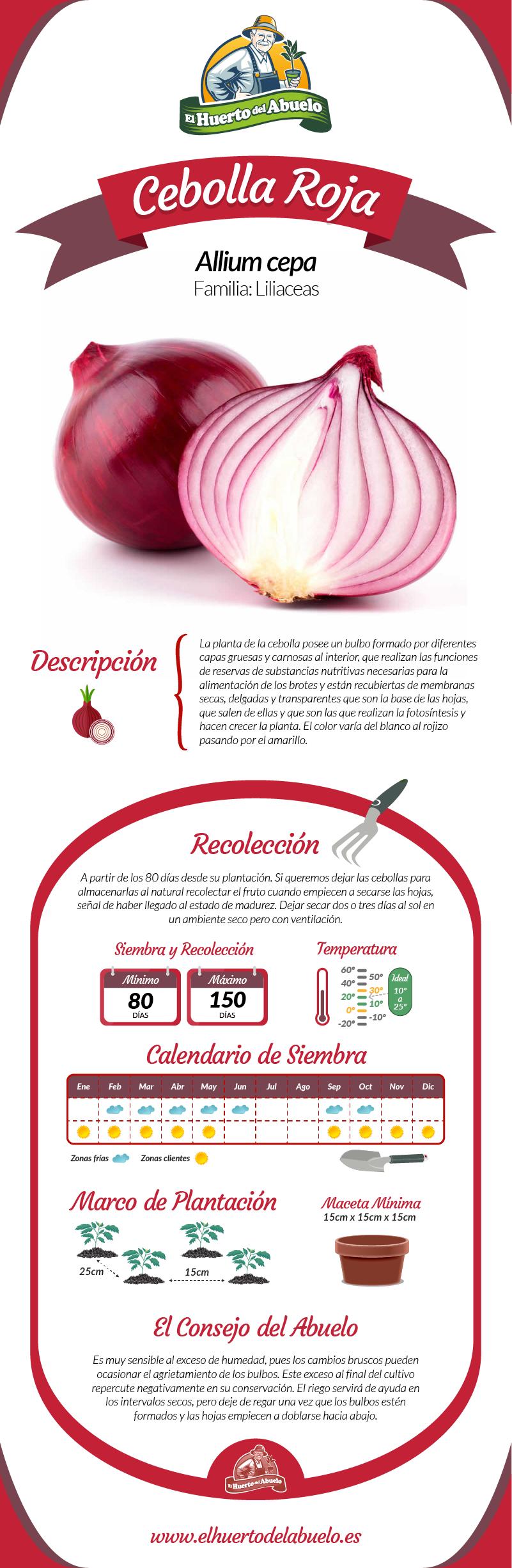 Infografía cebolla roja