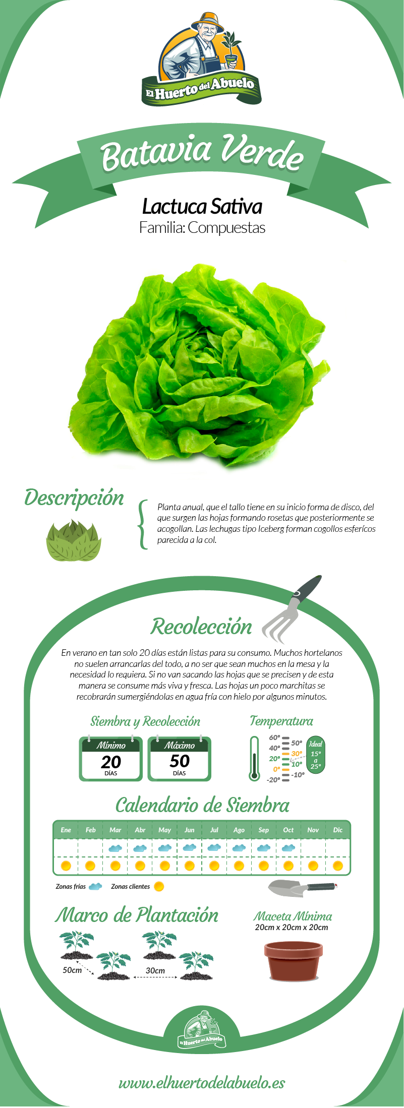 Infografía lechuga Batavia verde