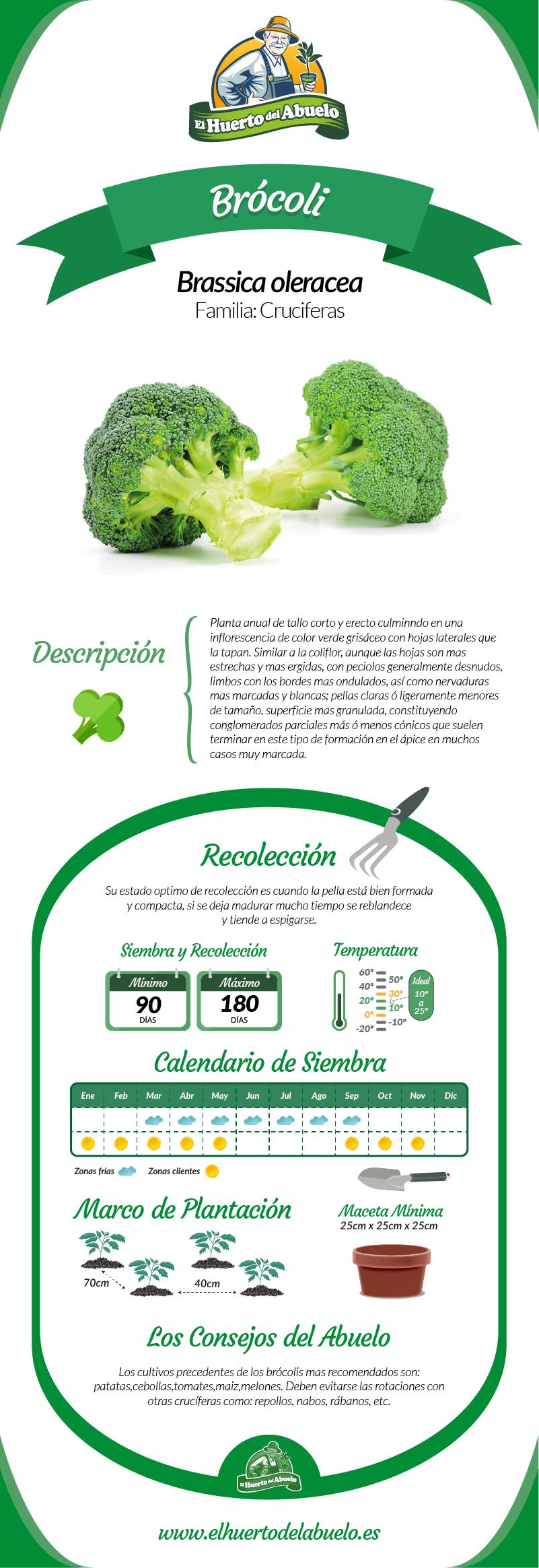 Infografía brócoli
