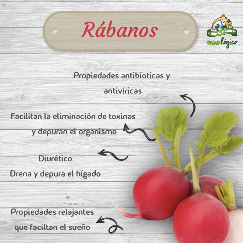 Beneficios rábanos