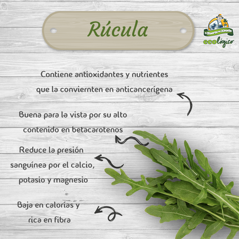 Beneficios rúcula